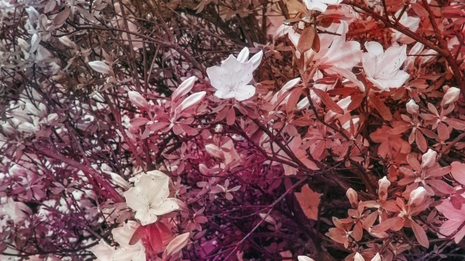 """Trevor Paglen, Bloom (#7f595e), 2020, dye sublimation print, 137.2 cm × 102.9 cm (54"""" × 40-1/2""""), 140 cm × 105.7 cm × 5.1 cm (55-1/8"""" × 41-5/8"""" × 2""""), framed, Edition 1 of 5, Edition of 5 + 2 APs, PHOTO, No. 75665.01, Alt # 387, format of photography: digital, source of photography: Trevor Paglen Studio"""