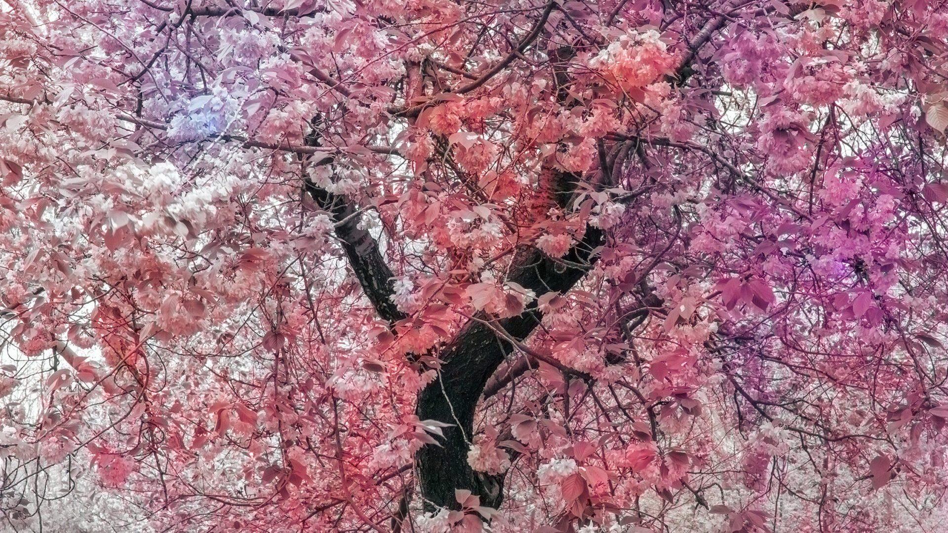 "Trevor Paglen,   Bloom (#a5808a), 2020 dye sublimation print 137.2 cm × 102.9 cm (54"" × 40-1/2""), 2020   Edition 1 of 5,  Edition of 5 + 2 APs,   PHOTO,   No. 75666.01,  Alt # 388,   format of photography: digital,  source of photography: Trevor Paglen Studio"