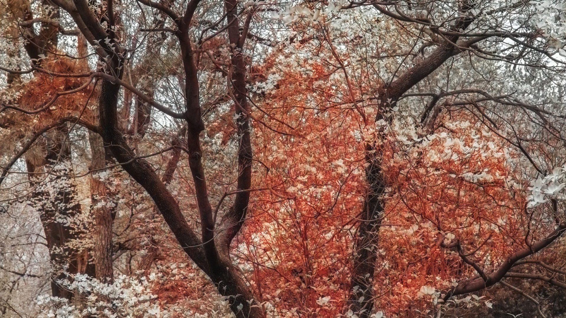 "Trevor Paglen,   Bloom (#79655d), 2020 dye sublimation print 66 cm × 49.5 cm (26"" × 19-1/2"")    Edition 1 of 5,  Edition of 5 + 2 APs,   PHOTO,   No. 75671.01,  Alt # 399,   format of photography: digital,  source of photography: Trevor Paglen Studio"