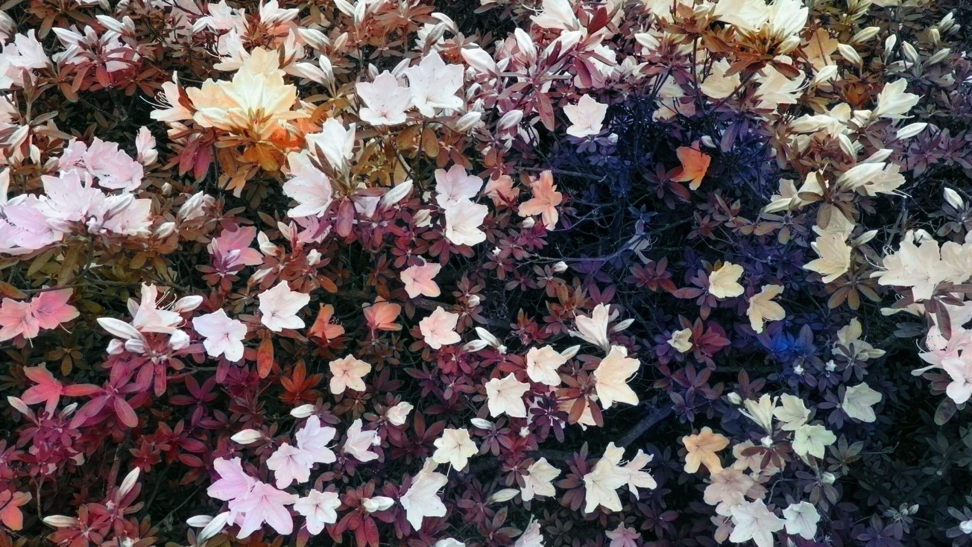 "Trevor Paglen,   Bloom (Coral), 2020,   dye sublimation print,  175.3 cm × 233.7 cm (69"" × 92""),   Edition 1 of 3,  Edition of 3 + 1 AP,   PHOTO,   No. 75673.01,  Alt # 384,   format of photography: digital,  source of photography: Trevor Paglen Studio"