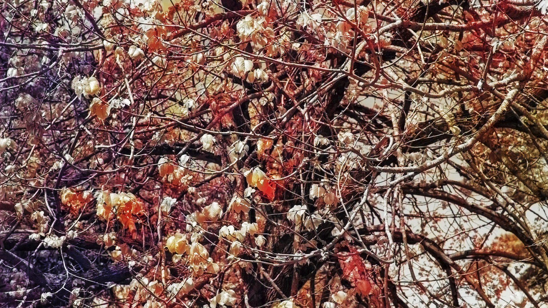 "Trevor Paglen, Bloom (Vermillion), 2020, dye sublimation print, 233.7 cm × 175.3 cm (92"" × 69""), Edition 1 of 3, Edition of 3 + 1 AP, PHOTO, No. 75674.01, Alt # 385, format of photography: digital, source of photography: Trevor Paglen Studio"
